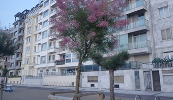 170601こういう樹.jpg