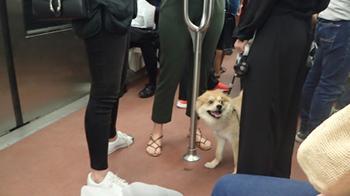 170715地下鉄はワンちゃんもOK.jpg