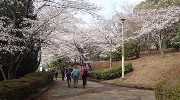 180327桜の公園.jpg