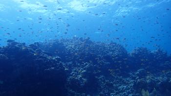 180416魚影濃い.jpg